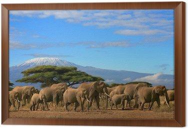 Obraz w Ramie Kilimanjaro Z Herd Elephant