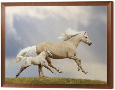 Obraz w Ramie Klacz i źrebię pony