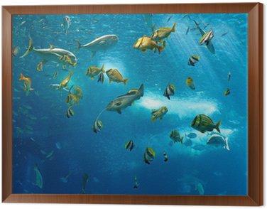 Obraz w Ramie Kolorowe ryby