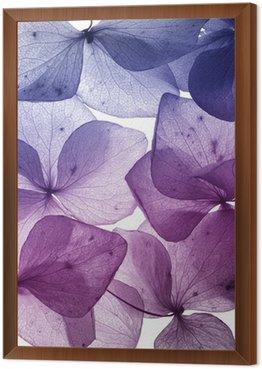 Obraz w Ramie Kolorowy kwiat płatek zbliżenie