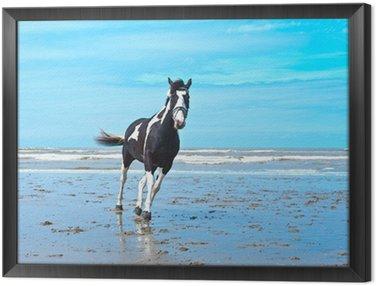 Obraz w Ramie Koń