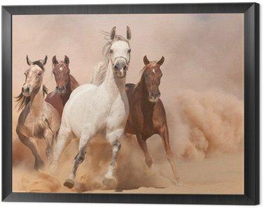 Obraz w Ramie Konie w kurzu