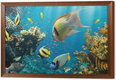 Koral i ryb