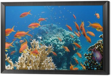 Obraz w Ramie Koral i ryb