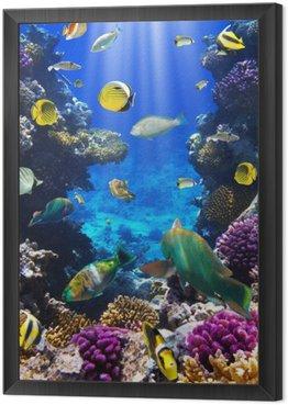 Obraz w Ramie Koral kolonii koralowców i ryb