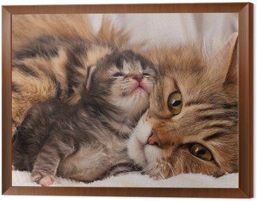 Obraz w Ramie Kot syberyjski