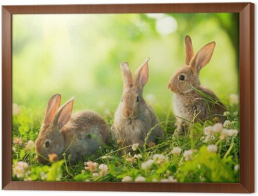 Obraz w Ramie Króliki. Art Design cute little wielkanocne króliczki na łące.
