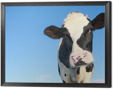 Obraz w Ramie Krowa Holstein przeciwko nieba