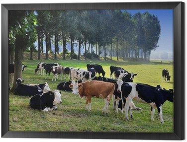 Obraz w Ramie Krowa na łące