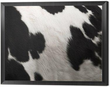 Obraz w Ramie Krowa ukryj druku