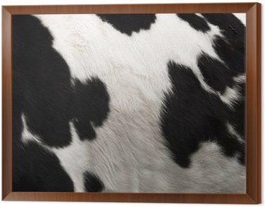 Krowa ukryj druku