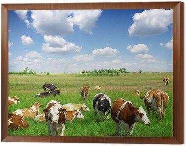 Obraz w Ramie Krowy na łąki letnim zielony