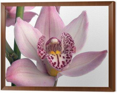 Obraz w Ramie Kwiat 5a