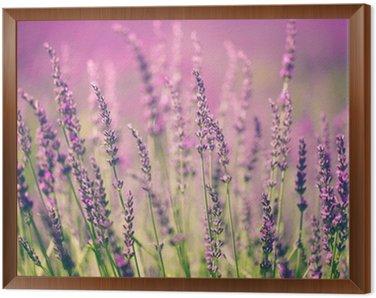 Obraz w Ramie Kwiat lawendy