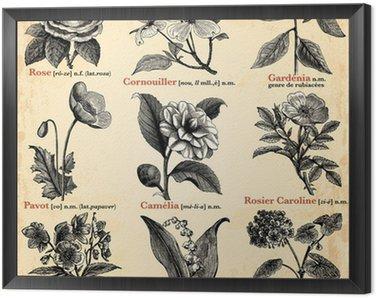 Obraz w Ramie Kwiaty ogrodowe