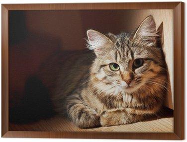 Obraz w Ramie Ładne kota