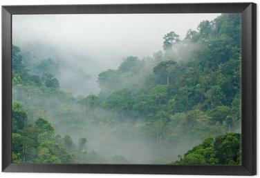 Obraz w Ramie Las deszczowy poranek mgła