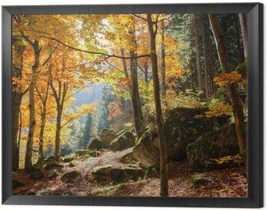 Obraz w Ramie Las jesienią