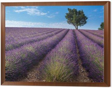 Lawenda w dziedzinie Valensole plateau Provence (Francja)