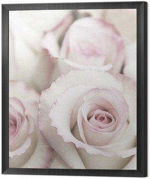 Lekkie Różowe róże