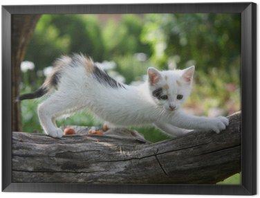 Obraz w Ramie Mały biały kotek zarysowania gałęzi drzewa