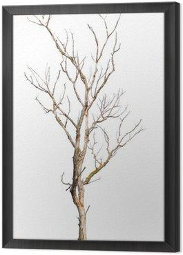 Obraz w Ramie Martwy pień drzewa na białym tle - klimat