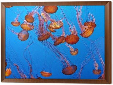 Obraz w Ramie Meduz w błękitnym oceanie