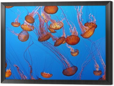 Meduz w błękitnym oceanie
