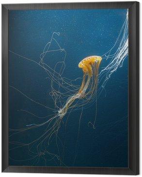 Meduza