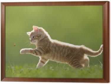 Młody kot z biedronka na zielonym polu