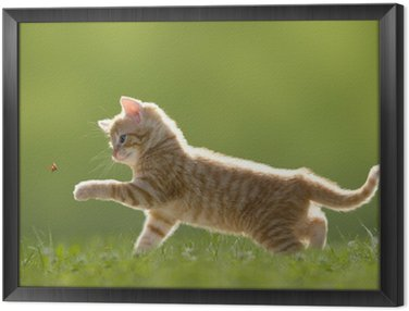 Obraz w Ramie Młody kot z biedronka na zielonym polu