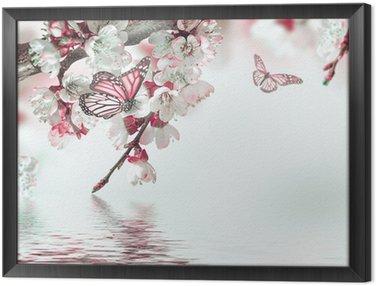 Obraz w Ramie Morelowe kwiaty na wiosnę, kwiatów w tle