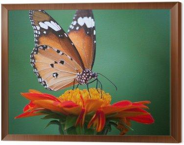 Obraz w Ramie Motyl na kwiat