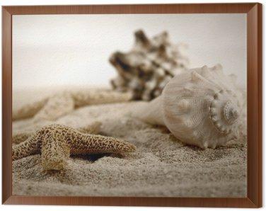 Obraz w Ramie Muszle na piasku