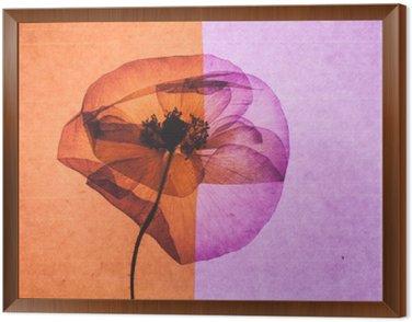 Obraz w Ramie Nice flower