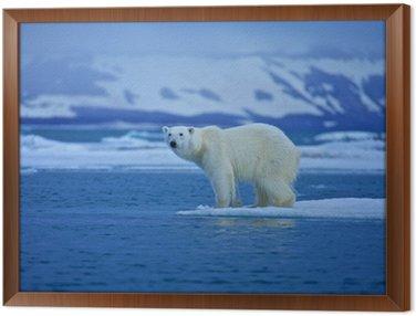 Obraz w Ramie Niedźwiedź polarny
