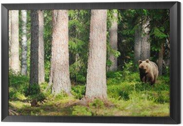 Obraz w Ramie Niedźwiedź w lesie Panorama