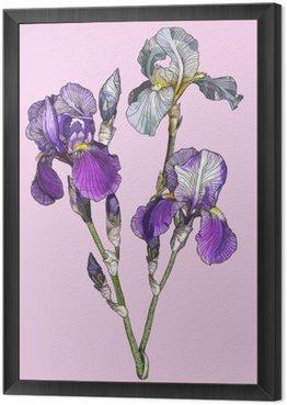 Obraz w Ramie Oddział kwitnących irysów