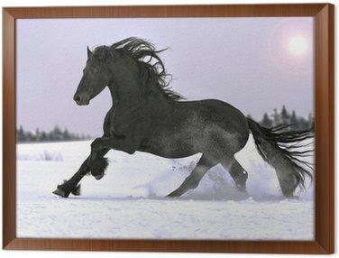 Obraz w Ramie Ogier fryzyjski galop w zimie