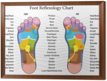 Obraz w Ramie Opis wykresu refleksologia stóp