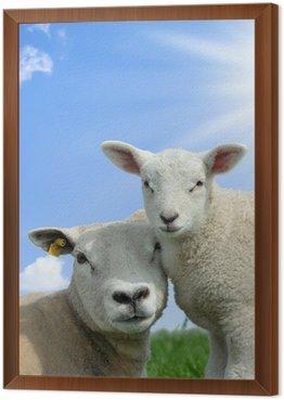Obraz w Ramie Owce Matka i jej jagnię wiosną