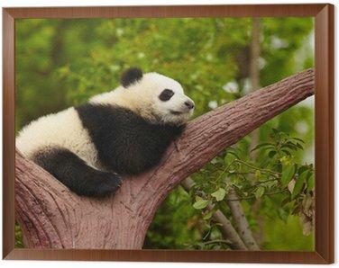 Obraz w Ramie Panda dziecko śpi