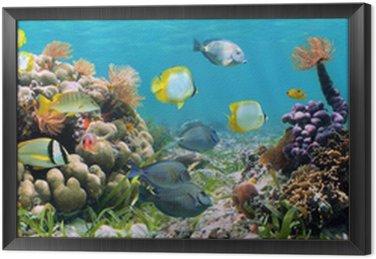 Obraz w Ramie Panoramiczny koralowa