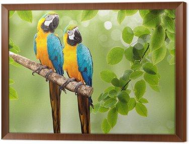 Obraz w Ramie Papuga ara na drzewie