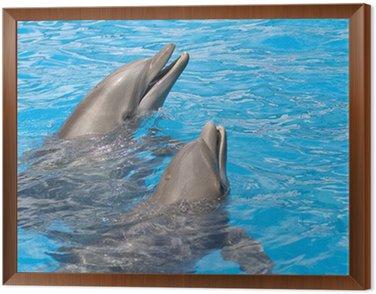 Obraz w Ramie Para delfinów z głowy z wody