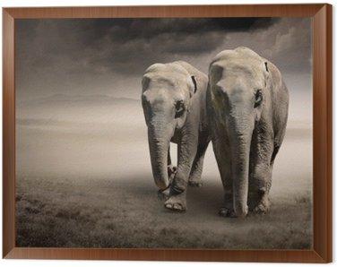 Obraz w Ramie Para słoni w ruchu