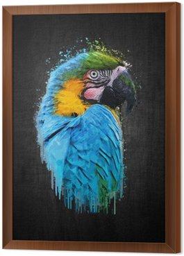 Obraz w Ramie Parrot ptaka (Severe ara). Lakier efekt