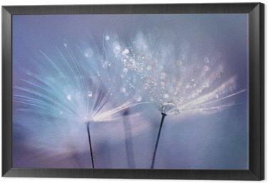 Obraz w Ramie Piękne krople rosy na makro z nasion mniszka. Piękne niebieskie tło. Duże złote krople rosy na dandelion spadochronem. Soft marzycielski przetargu formą artystyczny wizerunek.