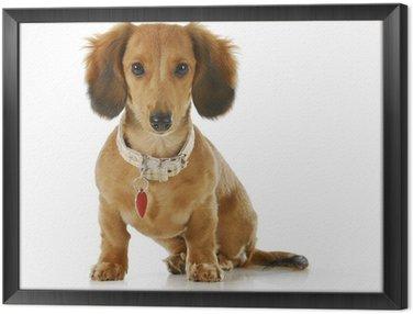 Obraz w Ramie Pies ma na sobie kołnierz i tag