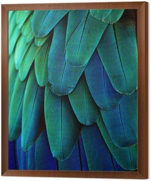 Obraz w Ramie Pióra ara (niebieski / zielony)